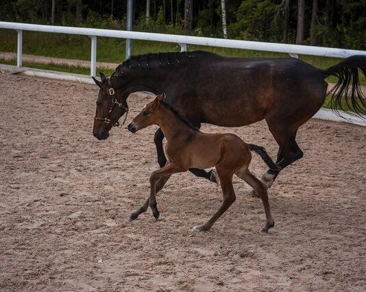 Ujeżdżalnia dla koni